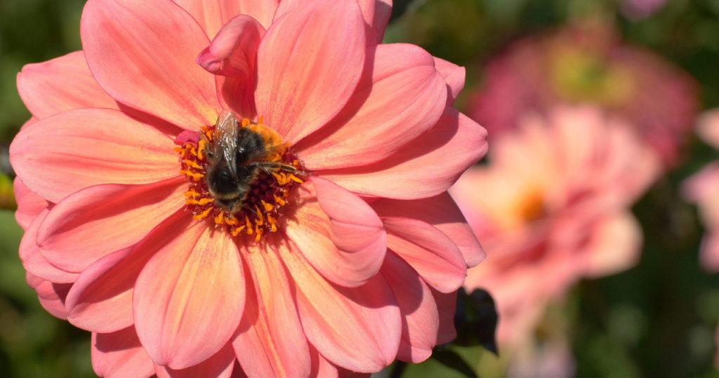 Les pollinisateurs sont indispensables à notre survie, ne les détruisons pas avec les pesticides - Moulin de Sugy