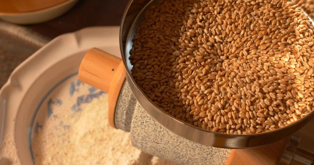 Mouture de blés récoltés au Moulin de Sugy. A la découverte des qualités boulangères, gustatives et nutritives de variétés paysannes.